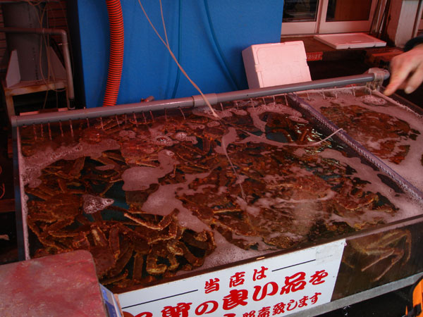long leg crabs, hokkaido