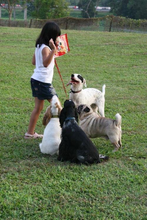 Puppycom Afamosa Doggie Meet Resort Stay, Melaka, Malaysia
